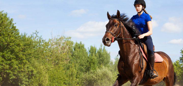 Prestige Equestrian Training